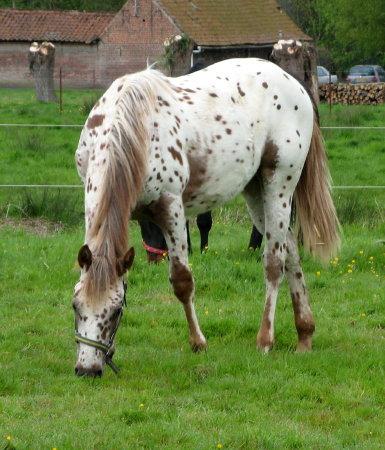 Recherche d'un cheval. Vos avis. Pocobluejetleo2mai2008%20142_1