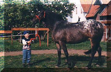 Poulain appaloosa 2009 Taiga22042003